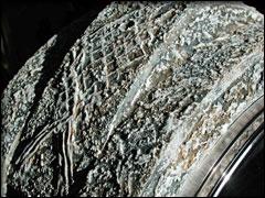 fossile03