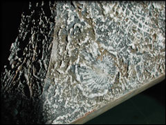 fossile04